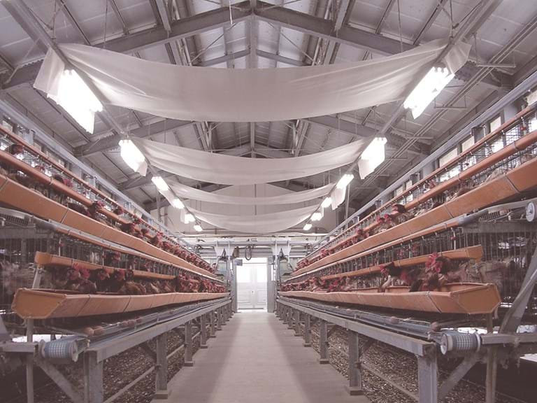 Deodoratex installed in a poultry shed